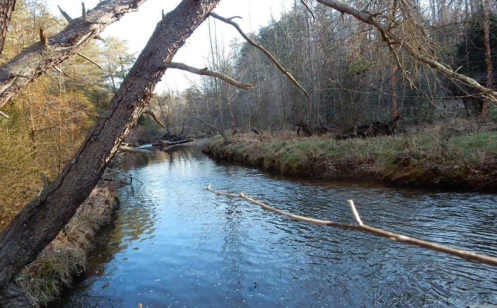Pyrite Mine Trail, Prince William Forest Park