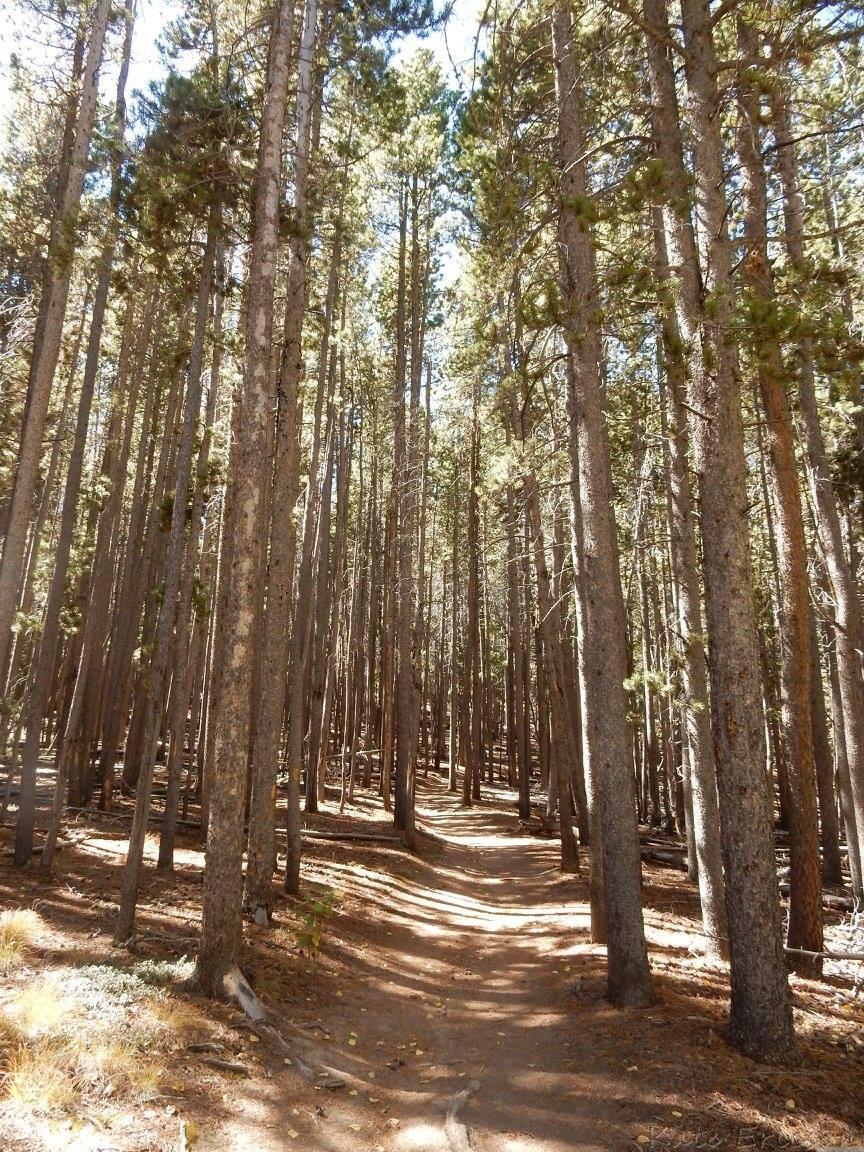 Meyer Ranch Park, Conifer, Colorado